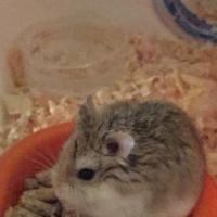 sexe hamster images gratuites de Teen Girls
